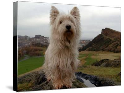 Filming the Adventures of Bobby, Edinburgh, November 2004--Stretched Canvas Print