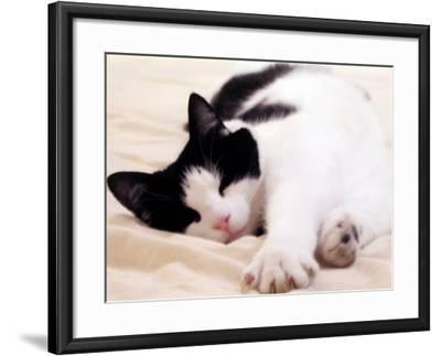 Pet of the Week: Puss Puss Cat--Framed Photographic Print