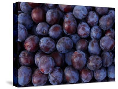 Blueberries--Stretched Canvas Print