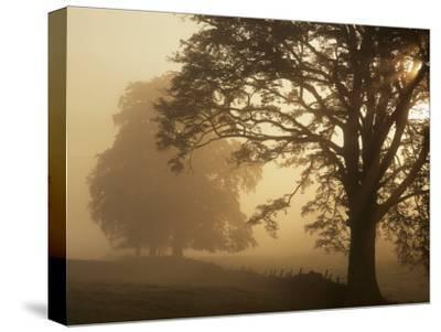 Autumn Morning, Near Dryman, Stirling, Scotland--Stretched Canvas Print