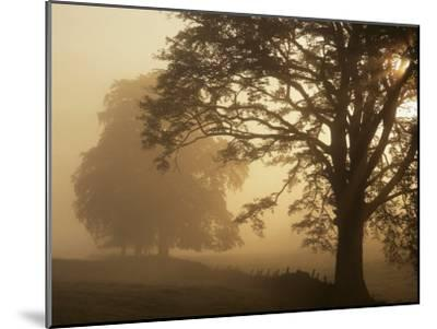 Autumn Morning, Near Dryman, Stirling, Scotland--Mounted Premium Photographic Print