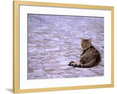 Cat in Street, Lipari, Sicily, Italy-Connie Bransilver-Framed Photographic Print