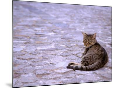 Cat in Street, Lipari, Sicily, Italy-Connie Bransilver-Mounted Photographic Print
