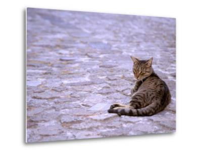Cat in Street, Lipari, Sicily, Italy-Connie Bransilver-Metal Print