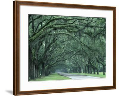 Historic Wormsloe Plantation, Savannah, Georgia, USA-Joanne Wells-Framed Photographic Print