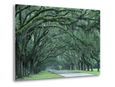 Historic Wormsloe Plantation, Savannah, Georgia, USA-Joanne Wells-Metal Print