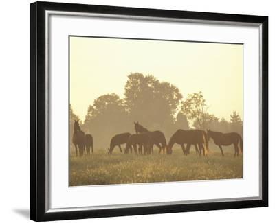 Thoroughbred Race Horses at Sunrise, Louisville, Kentucky, USA-Adam Jones-Framed Photographic Print