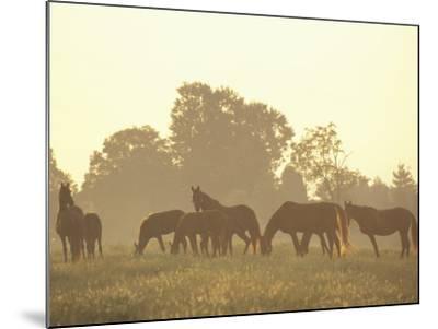 Thoroughbred Race Horses at Sunrise, Louisville, Kentucky, USA-Adam Jones-Mounted Photographic Print