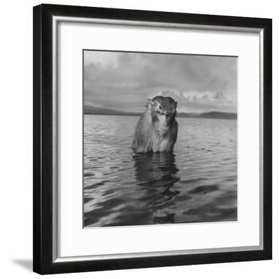 Rhesus Monkey Sitting in Water Up to His Chest-Hansel Mieth-Framed Photographic Print