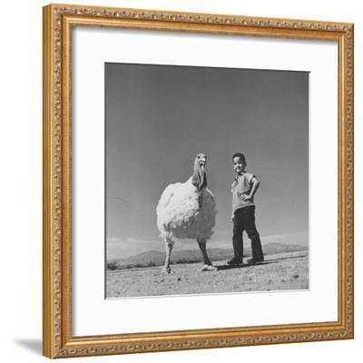 60 lb. Hybrid Turkey with 35 lb. Donny Bigfeather-Ralph Crane-Framed Photographic Print