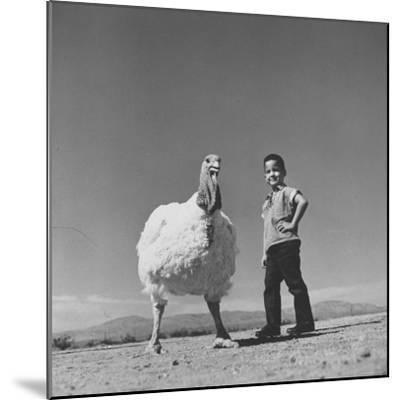60 lb. Hybrid Turkey with 35 lb. Donny Bigfeather-Ralph Crane-Mounted Photographic Print