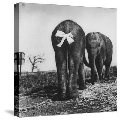 Baby Elephants Rehearsing For a Performance-Loomis Dean-Stretched Canvas Print
