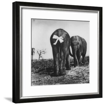 Baby Elephants Rehearsing For a Performance-Loomis Dean-Framed Photographic Print