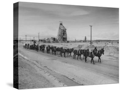 Trademark Twenty Mule Team of the US Borax Co. Pulling Wagon Loaded with Borax-Ralph Crane-Stretched Canvas Print