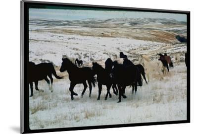 Wild Mustang Horses Running Across Field in Wyoming and Montana-Bill Eppridge-Mounted Photographic Print