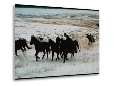 Wild Mustang Horses Running Across Field in Wyoming and Montana-Bill Eppridge-Metal Print