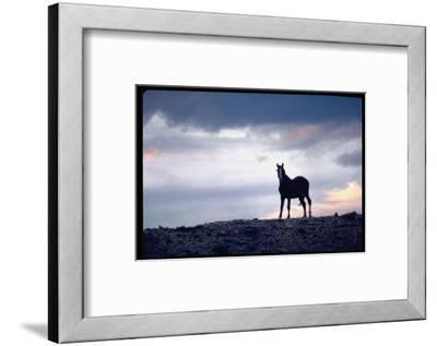 Wild Mustang Horses Running Across Field in Wyoming and Montana-Bill Eppridge-Framed Photographic Print