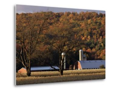 Fall Colors and a Field of Dried Soybeans in Pleasant Gap, Pennsylvania, October 20, 2006-Carolyn Kaster-Metal Print