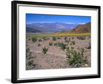 Desert Gold Wildflowers and Black Mountains, Death Valley National Park, California, USA-Jamie & Judy Wild-Framed Photographic Print