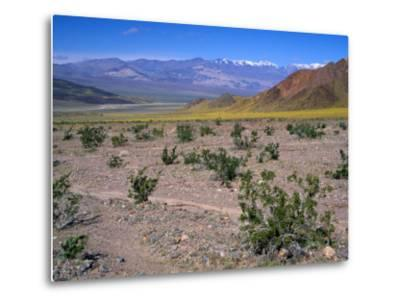 Desert Gold Wildflowers and Black Mountains, Death Valley National Park, California, USA-Jamie & Judy Wild-Metal Print