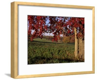 Autumn Color Frames the Rolling Hills of the Virginia Foxhunt Country-Stephen St^ John-Framed Photographic Print