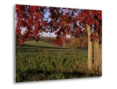 Autumn Color Frames the Rolling Hills of the Virginia Foxhunt Country-Stephen St^ John-Metal Print