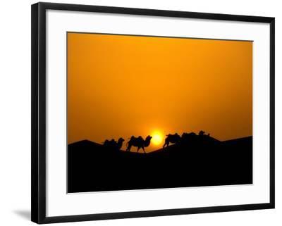 Camel Caravan Silhouette at Dawn, Silk Road, China-Keren Su-Framed Photographic Print