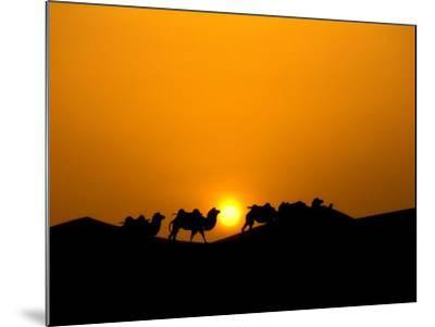 Camel Caravan Silhouette at Dawn, Silk Road, China-Keren Su-Mounted Photographic Print