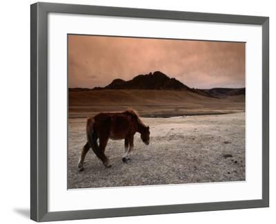 The Wild Horse of Mongolia-Olivier Cirendini-Framed Photographic Print