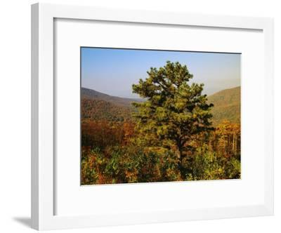 Pine Tree and Forested Ridges of the Blue Ridge Mountains-Raymond Gehman-Framed Photographic Print