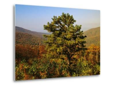 Pine Tree and Forested Ridges of the Blue Ridge Mountains-Raymond Gehman-Metal Print