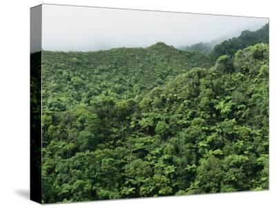 Elevated View of Forest-Covered Mountains in Morning Fog-Tim Laman-Stretched Canvas Print