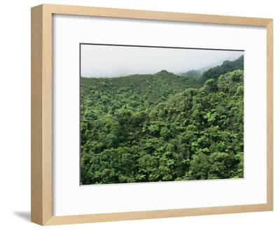 Elevated View of Forest-Covered Mountains in Morning Fog-Tim Laman-Framed Photographic Print