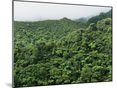 Elevated View of Forest-Covered Mountains in Morning Fog-Tim Laman-Mounted Photographic Print