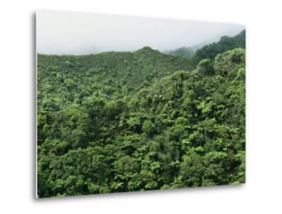 Elevated View of Forest-Covered Mountains in Morning Fog-Tim Laman-Metal Print