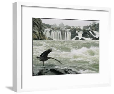 Great Blue Heron Stretches its Neck toward the Potomac River-Skip Brown-Framed Photographic Print