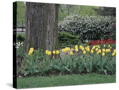 Franklin Park, Columbus, Ohio, USA--Stretched Canvas Print