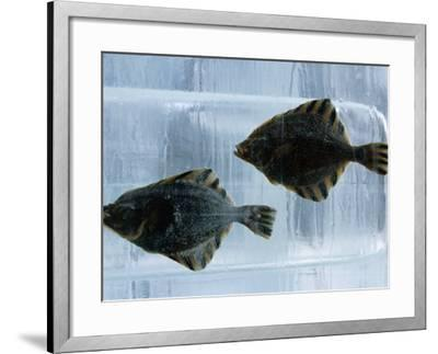 Pair of Fish Frozen in Ice for the Sapporo Yuki Matsuri (Snow Festival), Sapporo, Hokkaido, Japan,-Oliver Strewe-Framed Photographic Print
