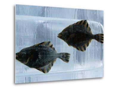 Pair of Fish Frozen in Ice for the Sapporo Yuki Matsuri (Snow Festival), Sapporo, Hokkaido, Japan,-Oliver Strewe-Metal Print