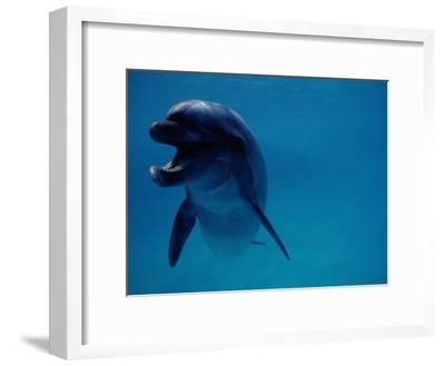 A Bottlenose Dolphin Swims in the Aquarium at Sea Life Park-Chris Johns-Framed Photographic Print