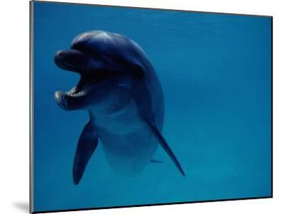 A Bottlenose Dolphin Swims in the Aquarium at Sea Life Park-Chris Johns-Mounted Photographic Print