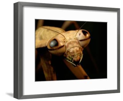The Eyes and Mandibles of a Mantid-George Grall-Framed Photographic Print