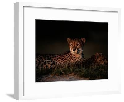 A Female African Cheetah and Her Cub Rest Together in the Early Evening-Chris Johns-Framed Photographic Print