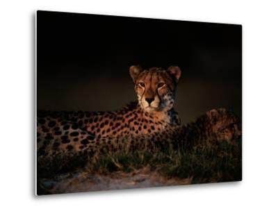 A Female African Cheetah and Her Cub Rest Together in the Early Evening-Chris Johns-Metal Print