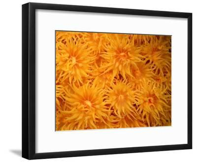 Close View of Cup Coral-Wolcott Henry-Framed Photographic Print