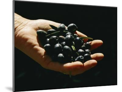 Prized Worldwide, These Fresh Hand-Picked Olives Will Soon Be Made into Oil-Ira Block-Mounted Photographic Print