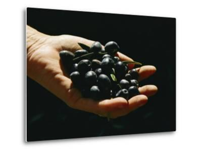 Prized Worldwide, These Fresh Hand-Picked Olives Will Soon Be Made into Oil-Ira Block-Metal Print