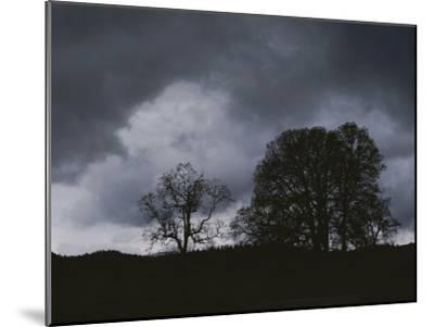 Trees Stand in Silhouette on a Dark Cloudy Day-Bates Littlehales-Mounted Photographic Print