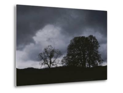 Trees Stand in Silhouette on a Dark Cloudy Day-Bates Littlehales-Metal Print
