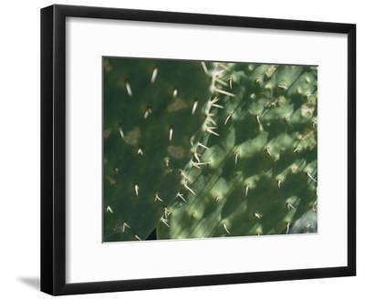 Close-up of a Prickly Pear Cactus in the Desert Sun-Todd Gipstein-Framed Photographic Print